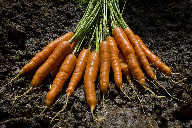 fresh vegetables, fall garden, tips and ideas,  maturity time, harvest, crops, soil temperature